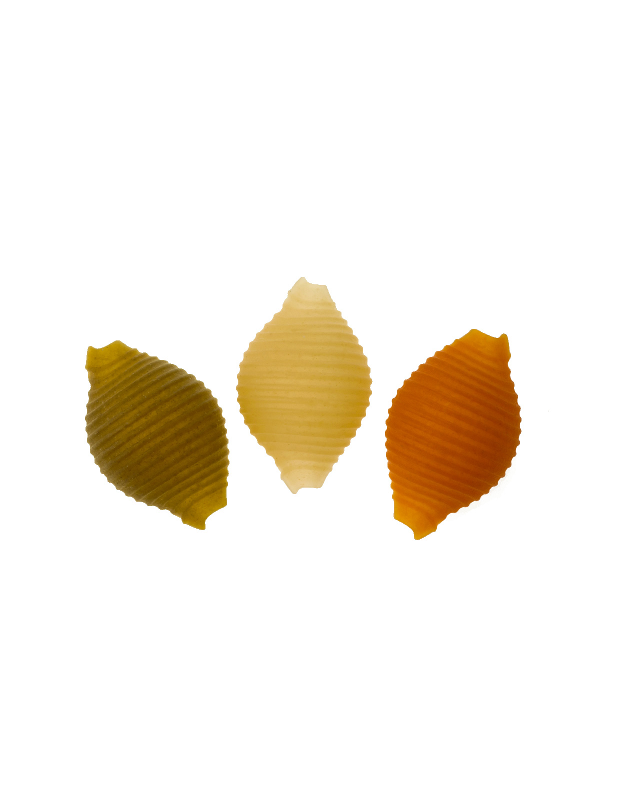 Margherite Tricolori n° 264
